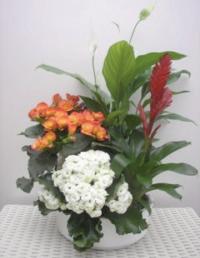Pflanzarrangement, bunt bepflanzt